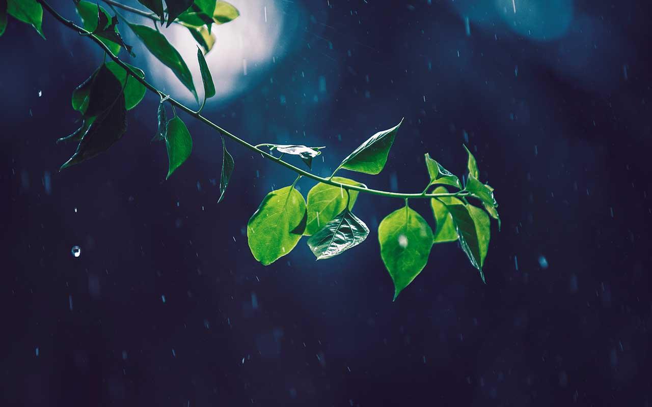 Mawsynram, Khasi Hills, Meghalaya, facts, rain, wettest inhabited place on Earth
