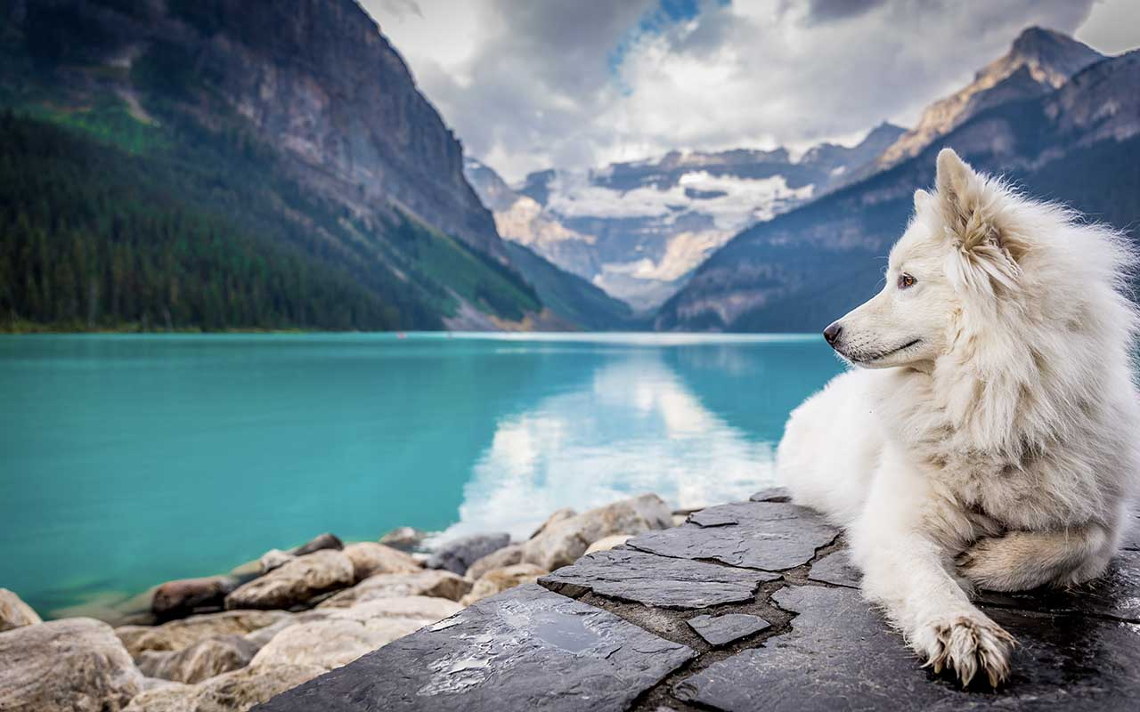 dogs, color, eyes, sight, disproven myths, facts, science, animals