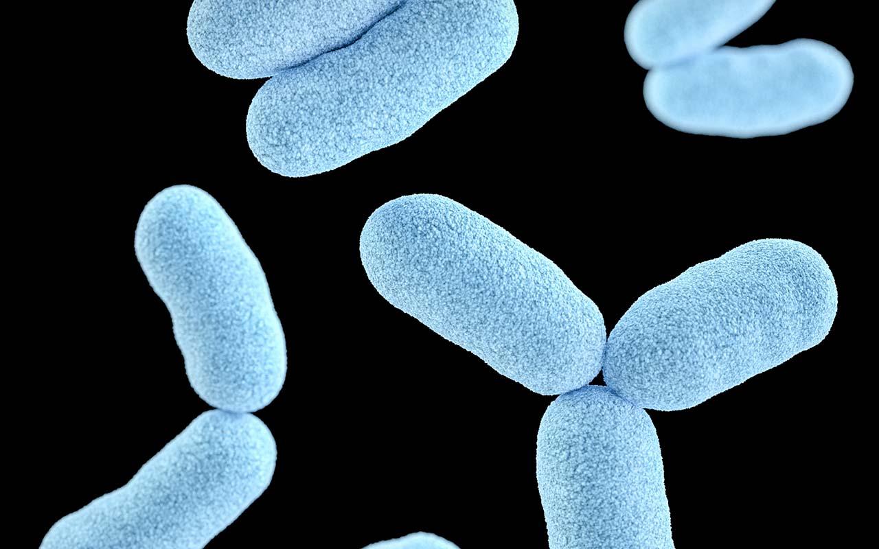 Microbacterium hatanonis, hairspray, bacteria, hair, human body
