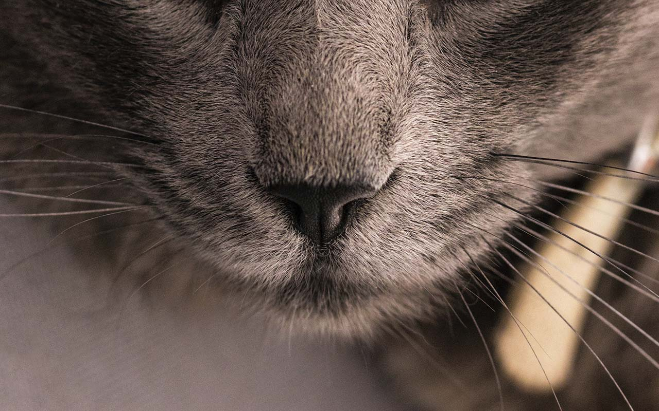 cat's nose, fingerprints, unique, patterns, life, animals