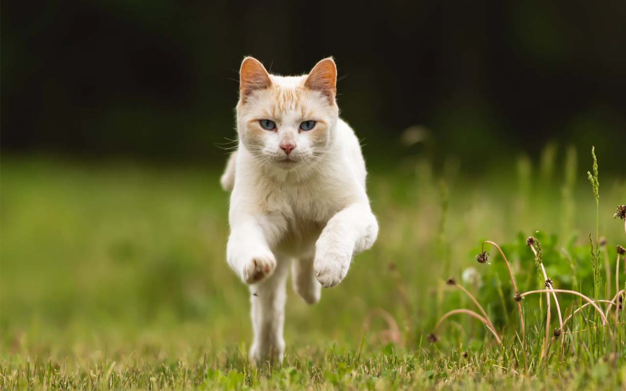 cat, running, top speed, life, people