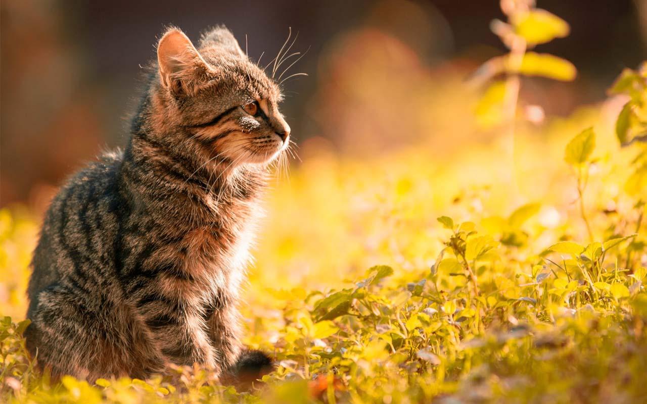 ears, scent, receptors, life, animals, pets, feline