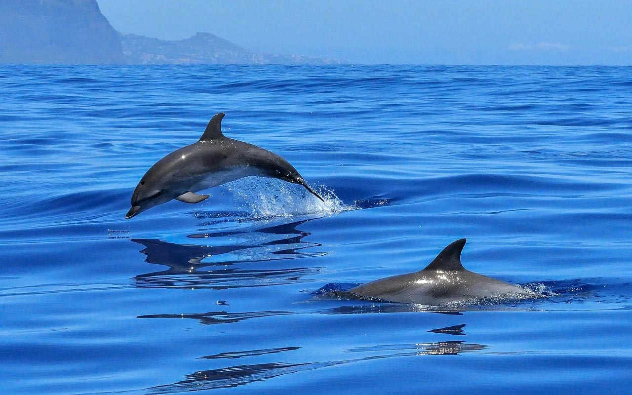 baby dolphins, mammals, creatures, life, facts