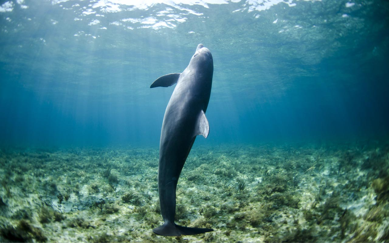dolphins, sleep, facts, life, entertainment, people
