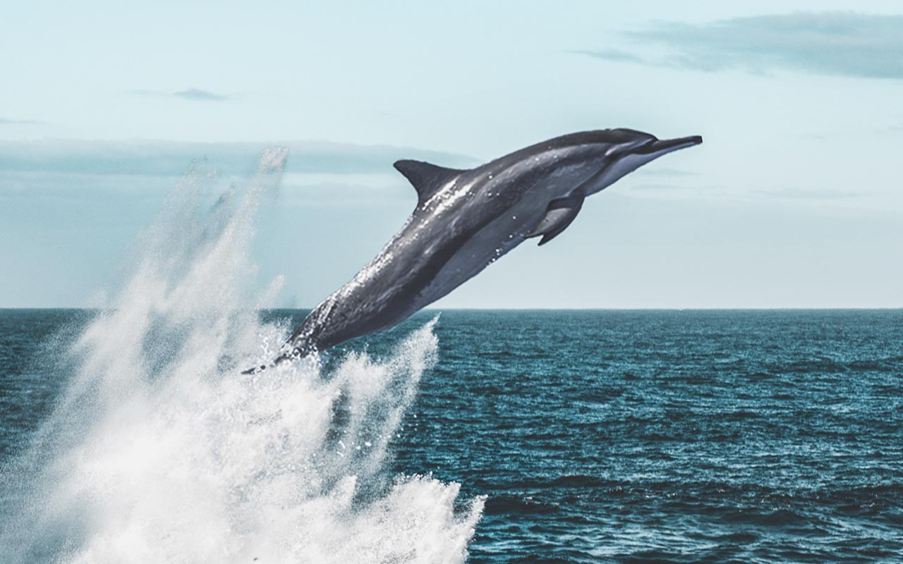 jumping, swimming, fast, ocean, life, animals