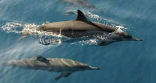 dolphins, facts, life, science, nature