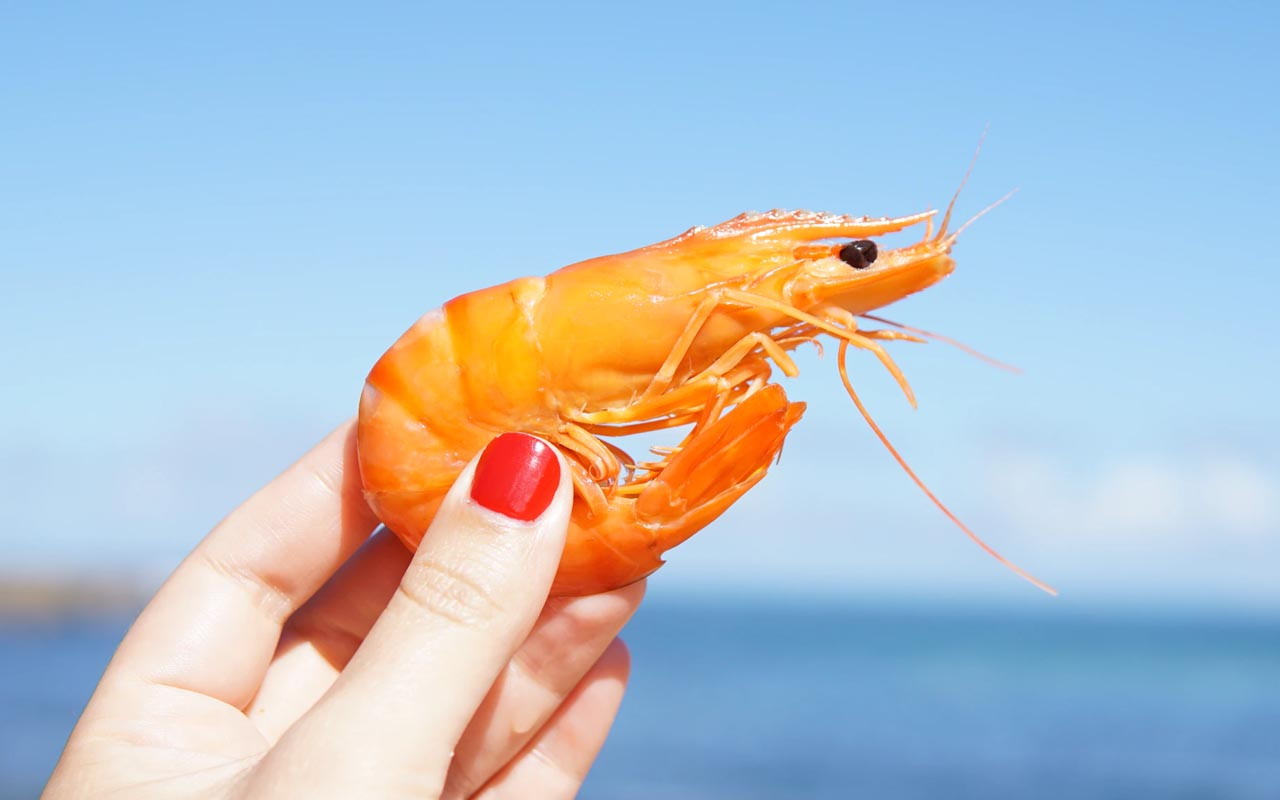 shrimp, heart, facts, ocean, nature, science