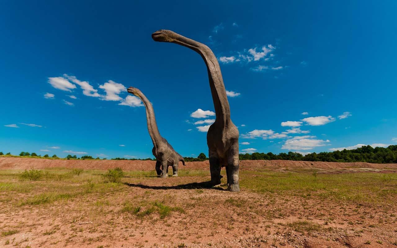 dinosaur, facts, water molecules, animals, history, pre-hisctoric