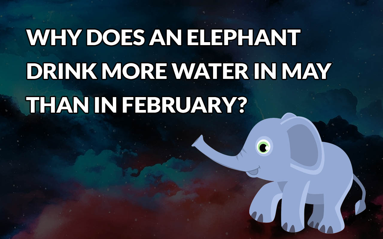 elephant, riddles, facts, animals, water, drinking, nature