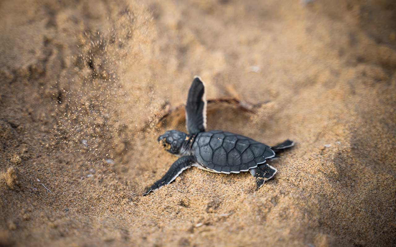 thinking, turtles, sea, ocean, life, marine, facts