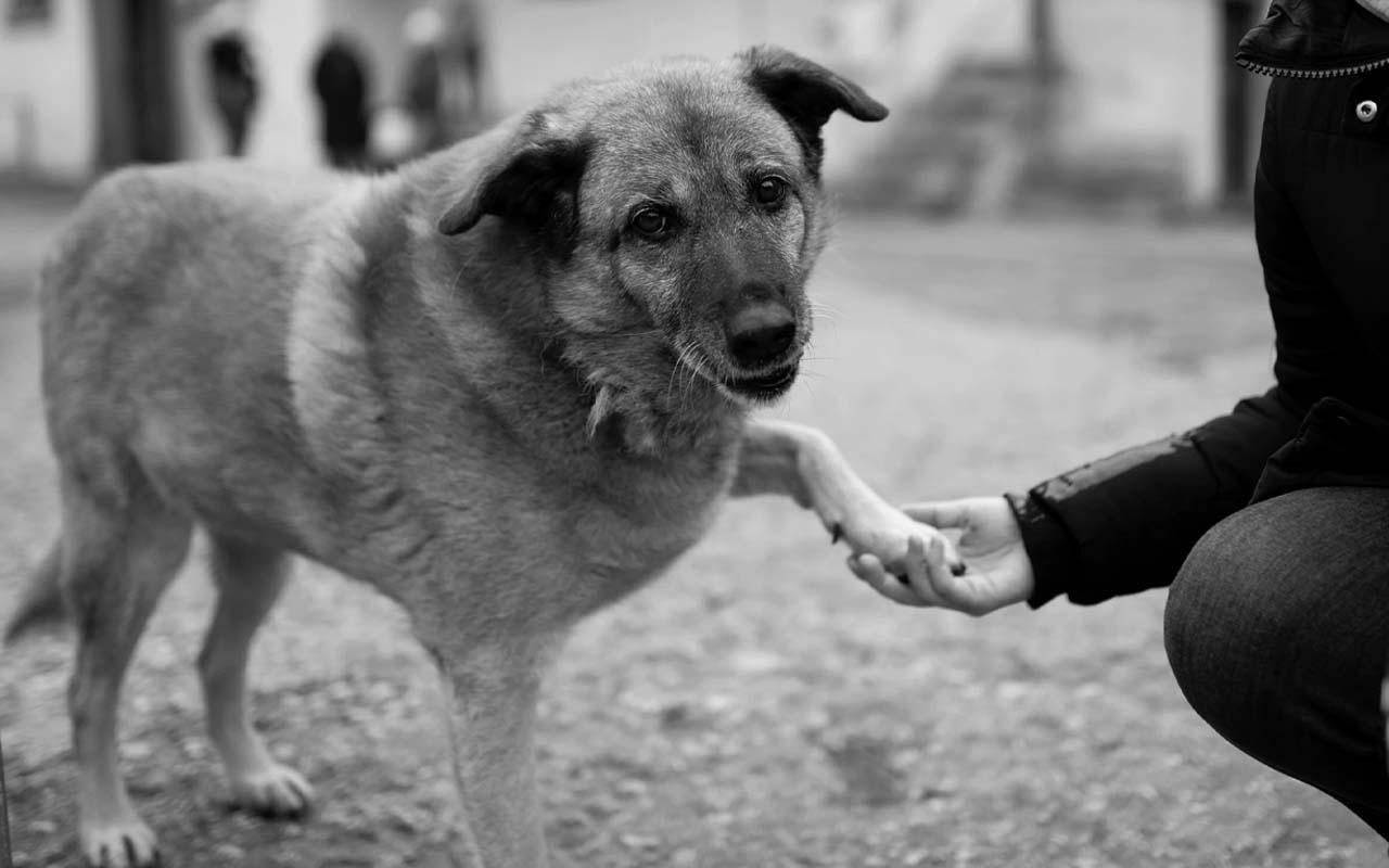 paw, dog, sad, people, help, reassurance, life, animals, health, happiness, love, affection
