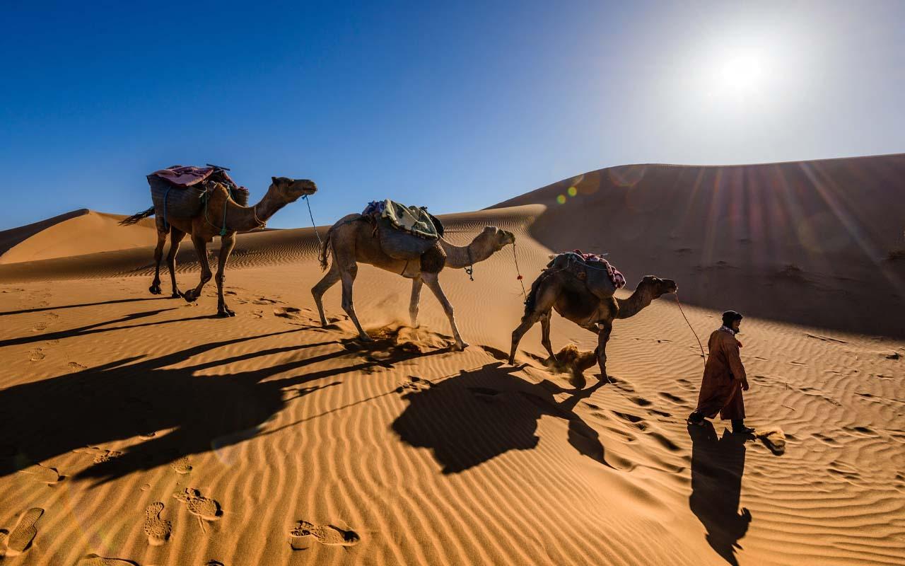 Saudi Arabia, Australia, sand, camels, desert, barren land, import, export, facts, heard, life, people, middle east, Europe