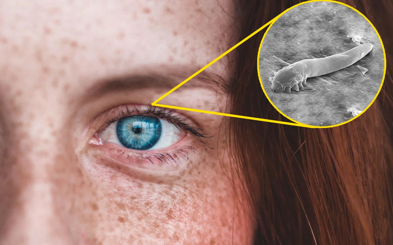 demodex, eyelashes, facts, science, people, weird, human body