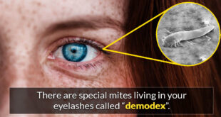demodex, eyelashes, science, facts, people, own body