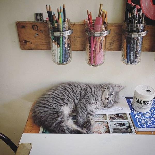 Amy Sol cat sleeping in studio