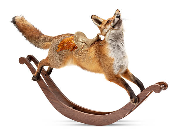 Julia deVille fox taxidermy