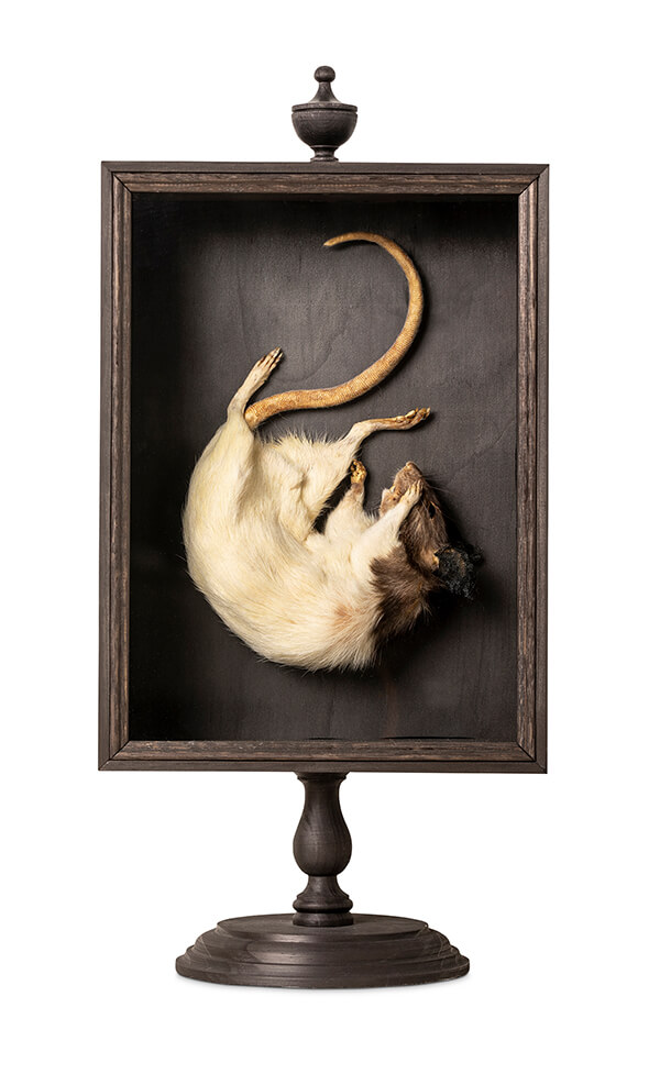 Julia deVille surreal rat shadowbox taxidermy