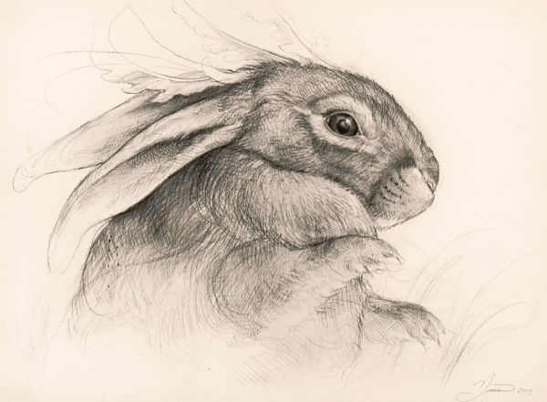Hannah Yata rabbit drawing