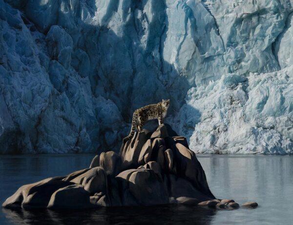 Antoine-Dutilh-cheetah-icebergs-art-prize-2020