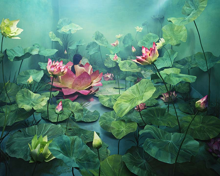 Jeeyoung Lee lily pads photography beautiful bizarre