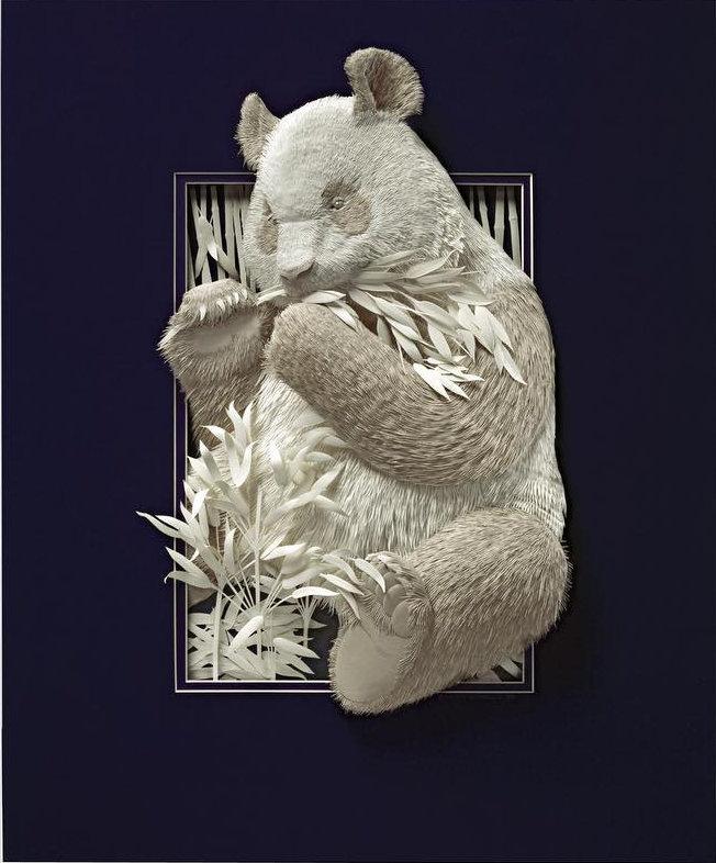 Calvin Nicholls paper panda