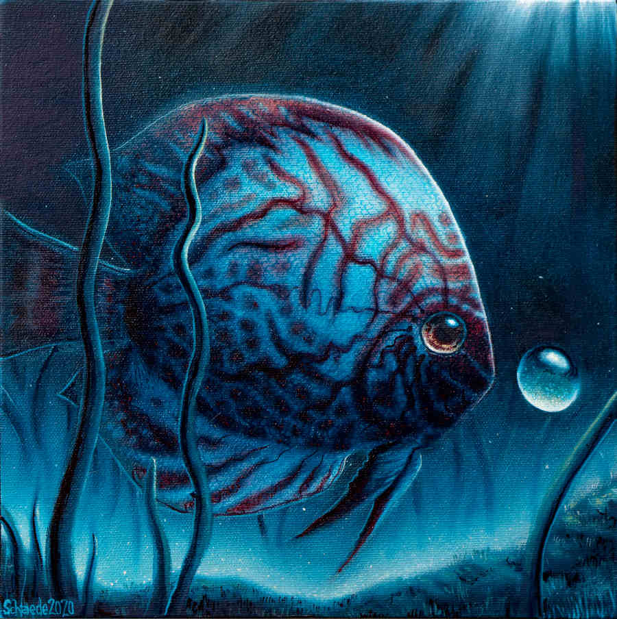 Ricky Schaede lumino blue fish