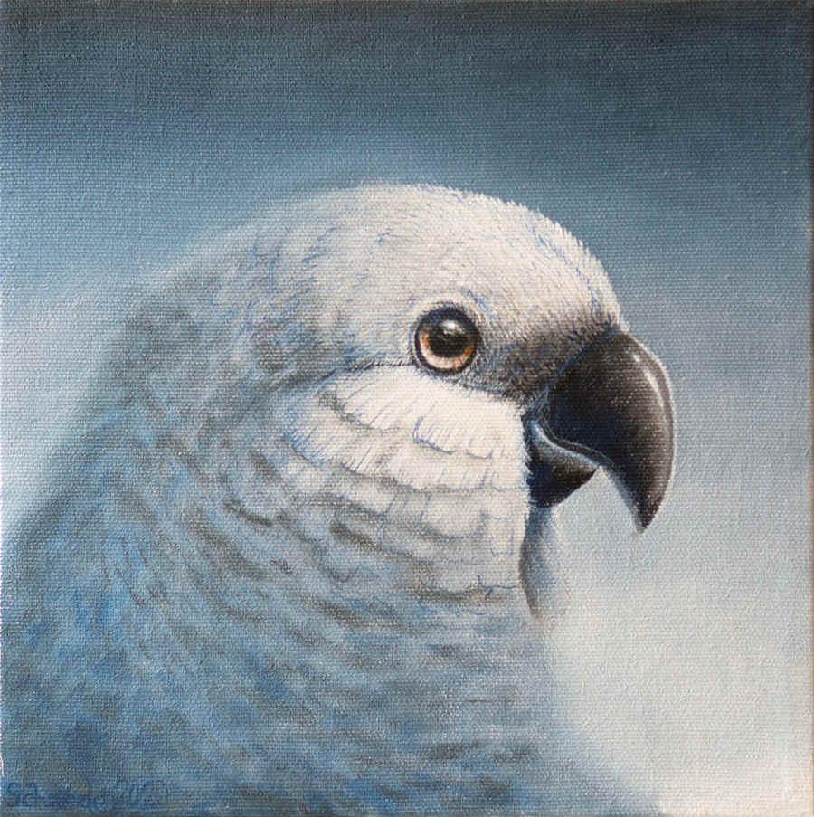 Ricky Schaede white bird