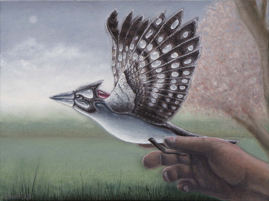 Ricky Schaede bird flying away