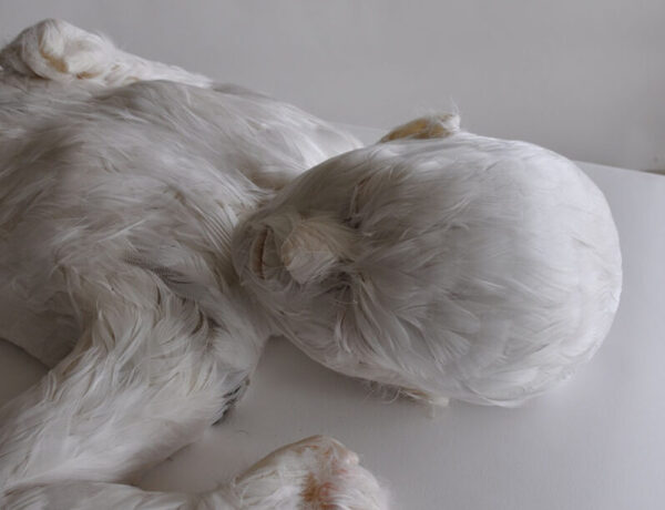 lucy glendinning - feather child sculpture