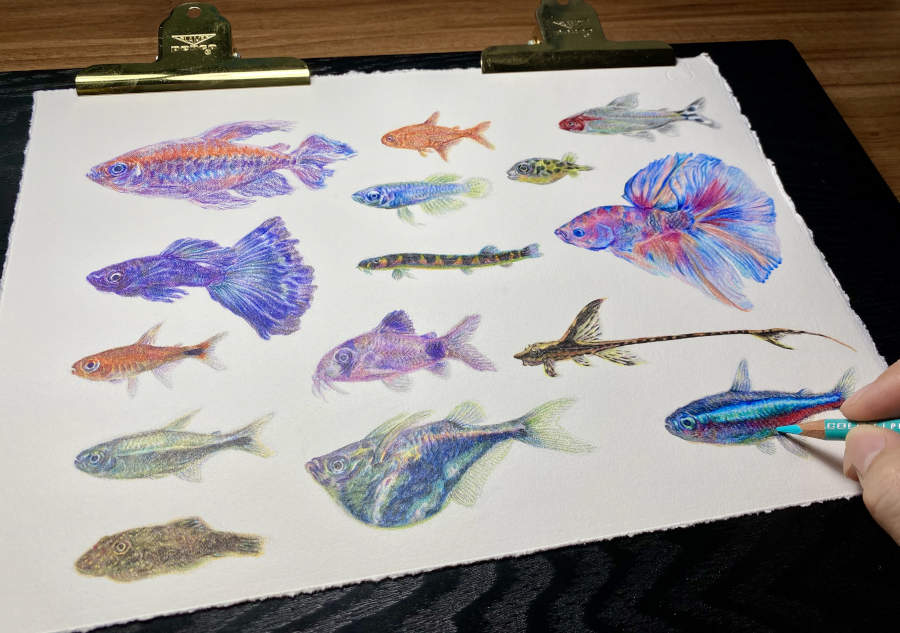Jealous_2018_Colored Pencils on Paper_5x8.25in.jpg.jpg tropical fish illustration