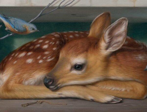 phillip-singer-fawn