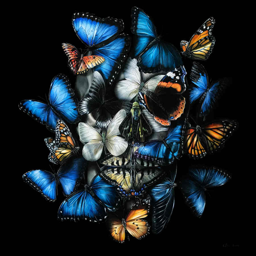 Clare Toms butterfly face skull