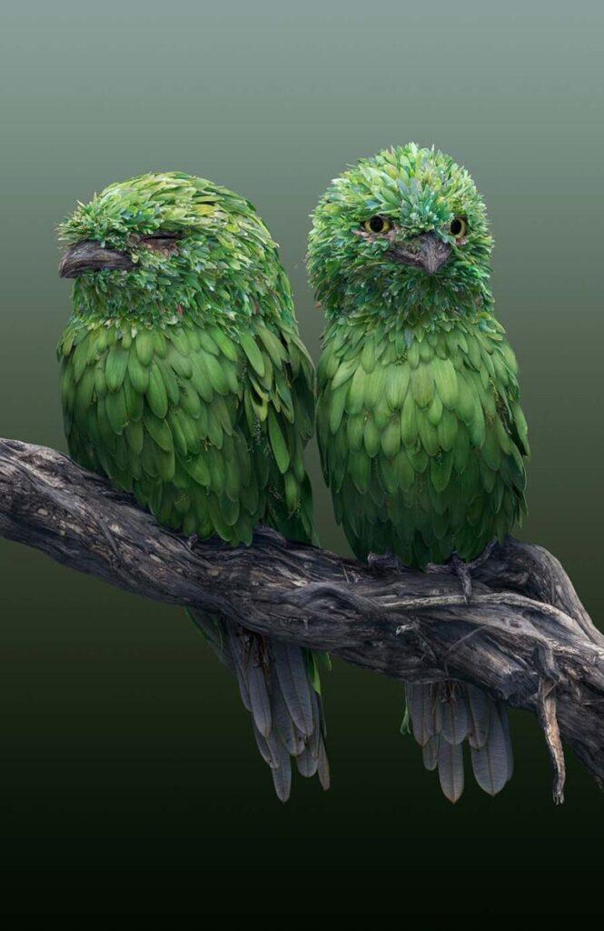 Josh Dykgraaf two birds