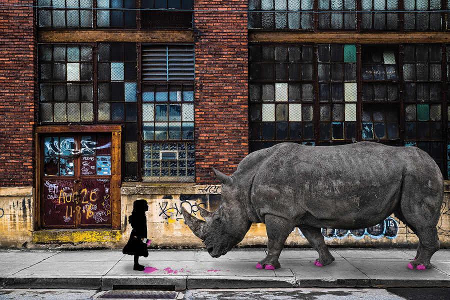 Matt Coglianese rhino girl iCanvas