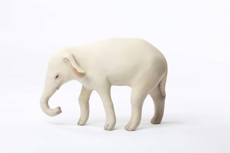 Yoshimasa-Tsuchiya-elephant