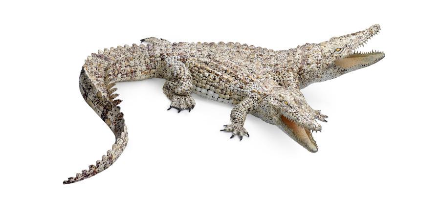 Sarah Lee two headed crocodile sculpture