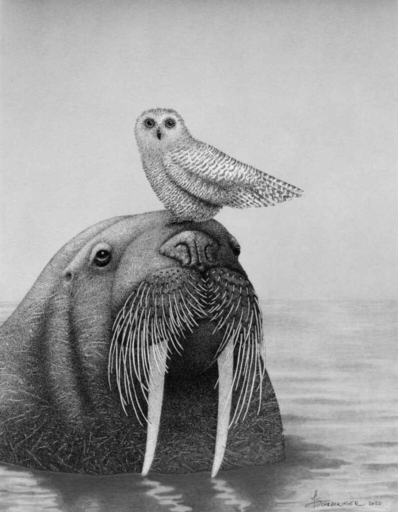 Black white walrus illustration animal