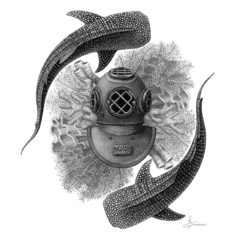Juliet Schreckinger underwater sharks illustration