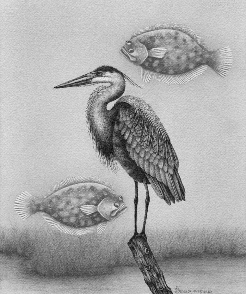 Heron and floating fish ink drawing