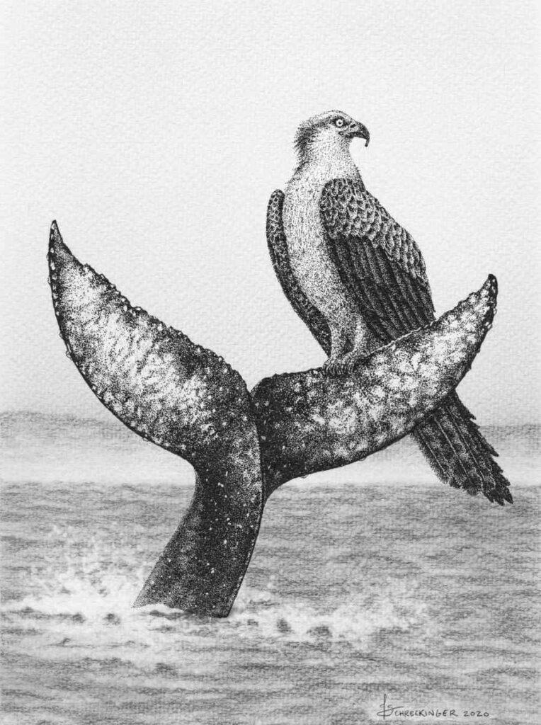 Juliet Schreckinger osprey bird and whale