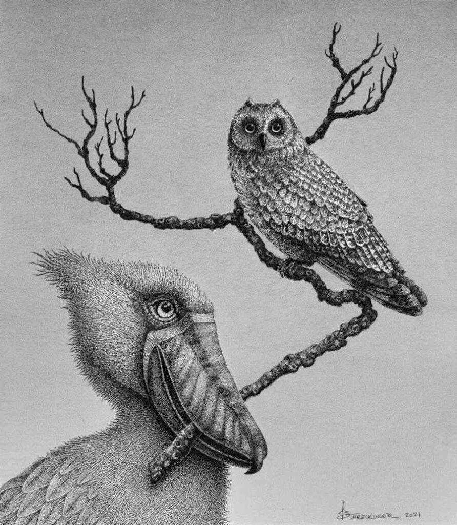 Juliet Schreckinger ink bird drawing