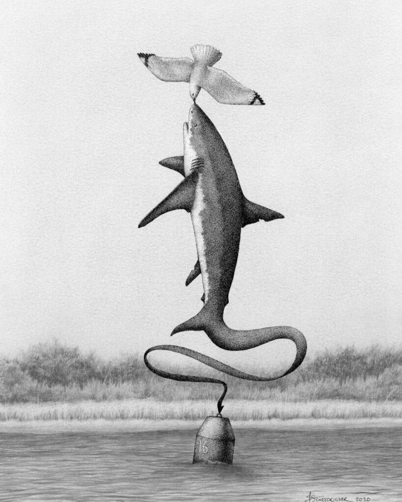 Juliet Schreckinger surreal balancing shark
