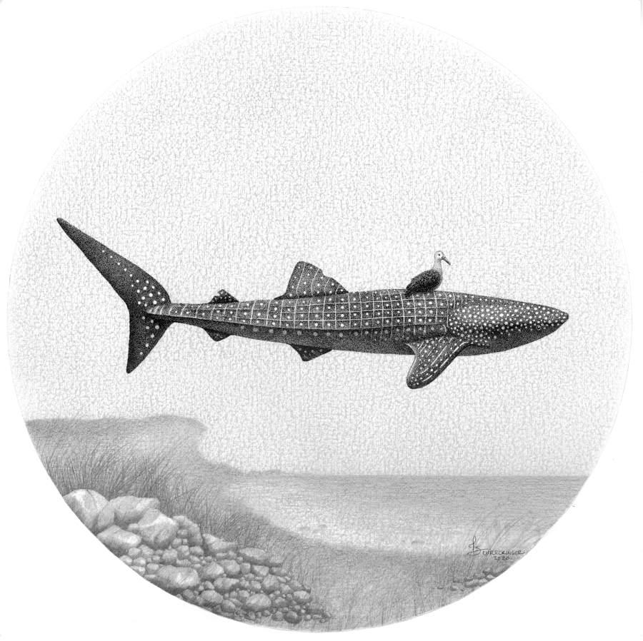 Juliet Schreckinger floating shark illustration