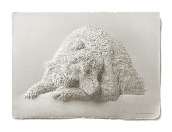 Calvin-Nicholls-bear