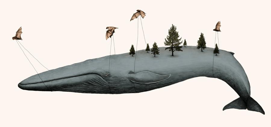 gabriella-barouch-whale-bats