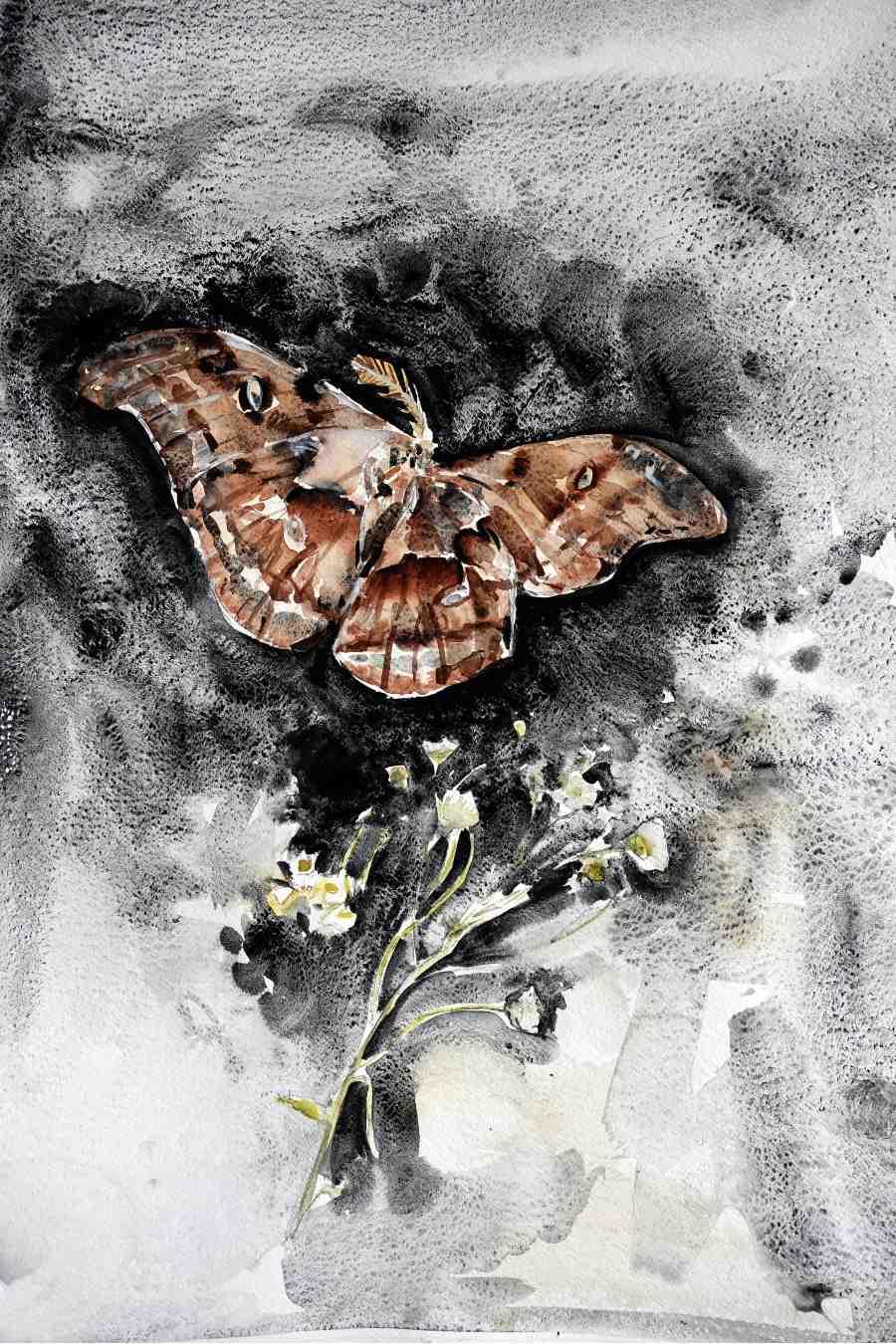 Ekaterina-Popova-Watercolor-Moth