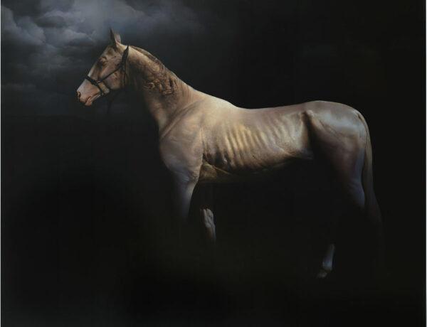 Roland-Mikhail-horse