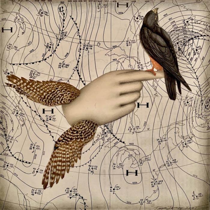 Teresa-James-Wings-in-the-Weather