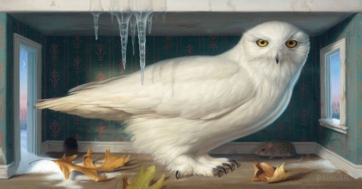 phillip-singer-white-owl