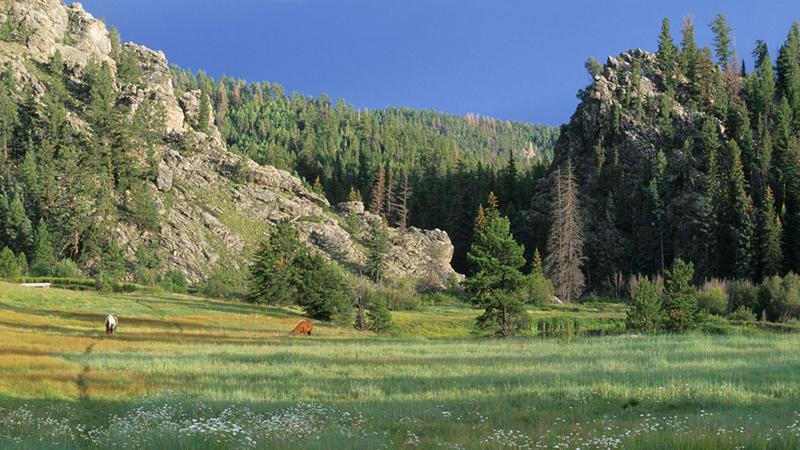 Vallecitos Mountain Ranch